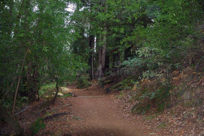 Les séquoias d'Armstrong énoncent la réservation naturelle, la Californie, Etats-Unis - pour préserver 805 acres 326 ha du séquoi images stock