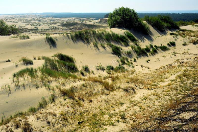Les sables de dérive du Curonian crachent, la Russie photographie stock