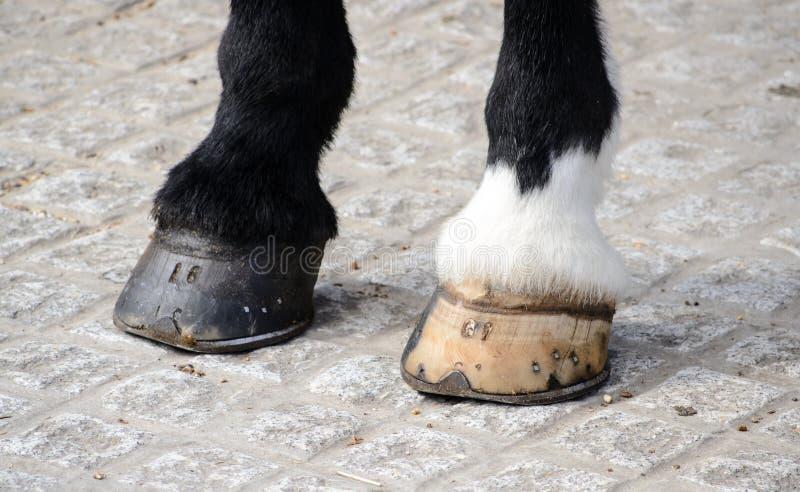 Les sabots du cheval images stock