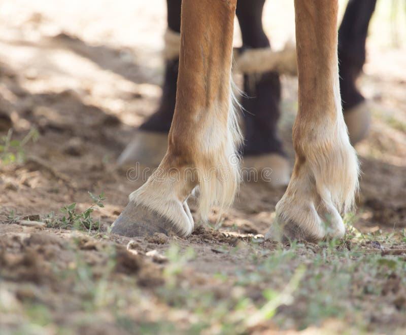 Les sabots du ` s de cheval images stock