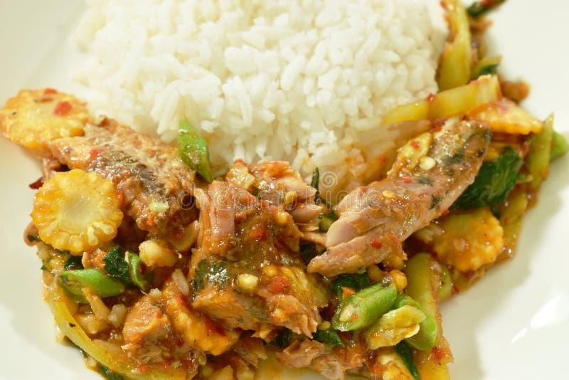 Les sardines en boîte frites par émoi épicé pêchent avec le piment et la feuille de basilic sur le riz photos libres de droits