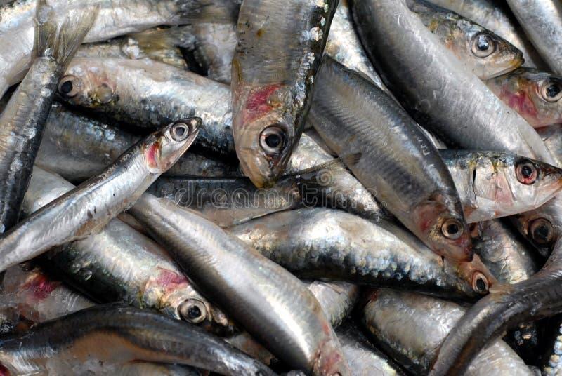 Les sardines fraîches ont empilé photo stock