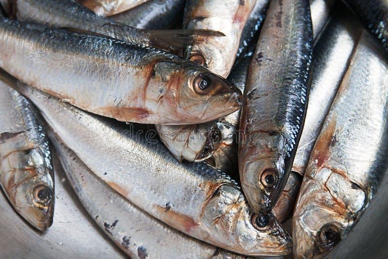 Les sardines fraîches se ferment avec l'espace de copie photos stock