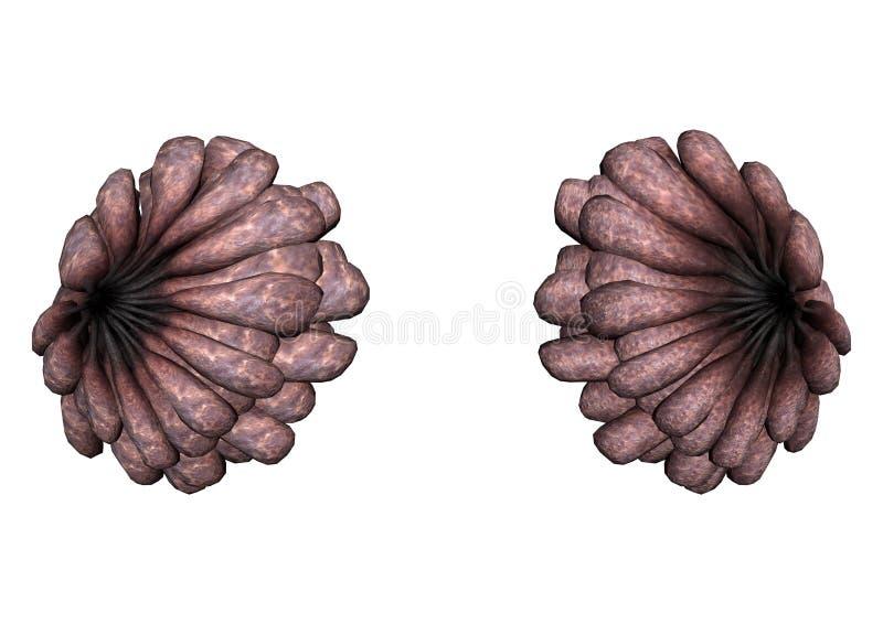 Les seins malades des femmes illustration stock