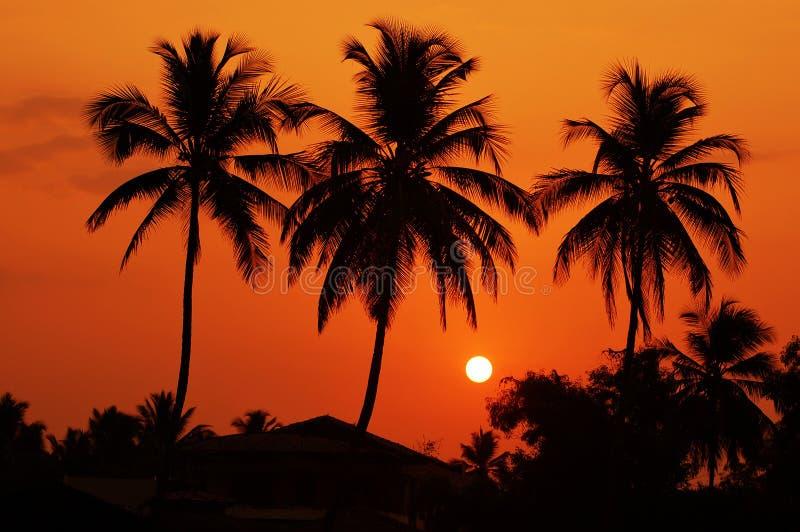 Les silhouettes des palmiers à l'aube image stock