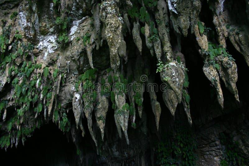 Les stalactites en parc national de Mulu, Bornéo images libres de droits
