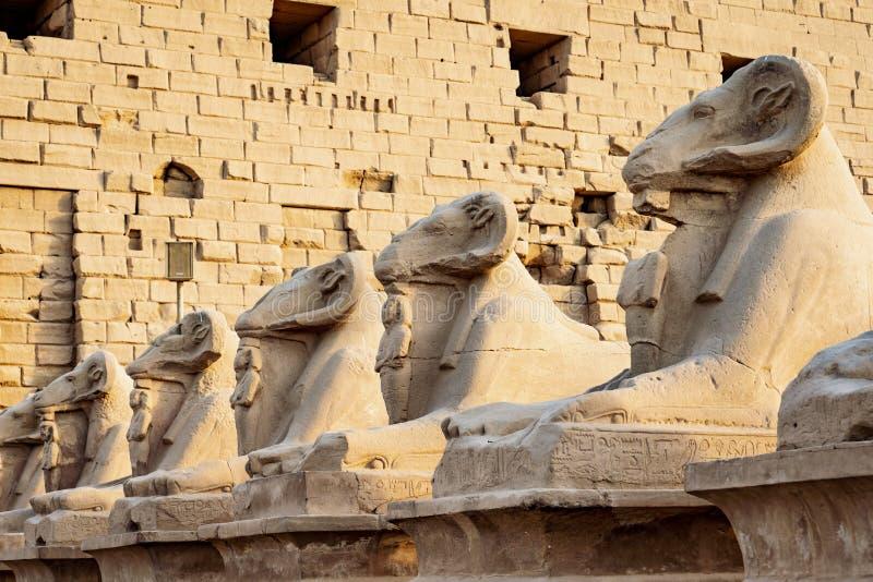 Les statues de Ram devant le temple de Karnak, Louxor, Egypte photographie stock libre de droits