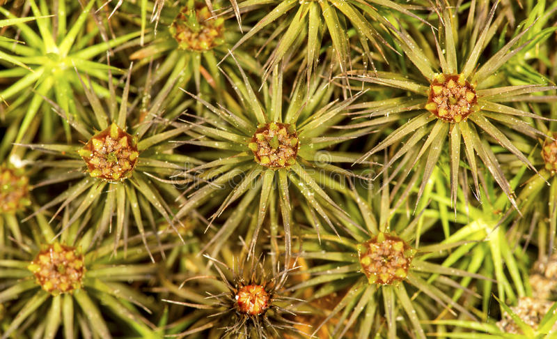 Les tasses masculines d'éclaboussure de cheveux couvrent la mousse à Manchester, le Connecticut photo stock