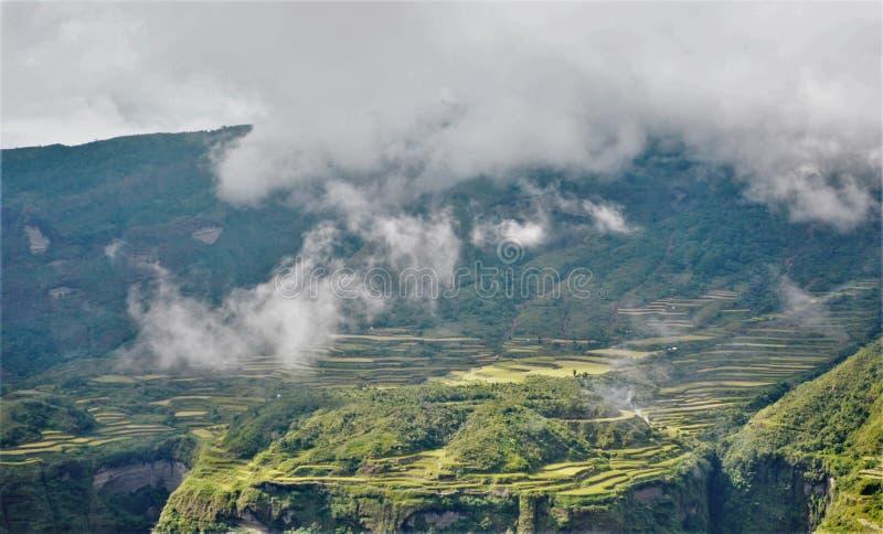Les terrasses admirablement machinées de riz photographie stock libre de droits