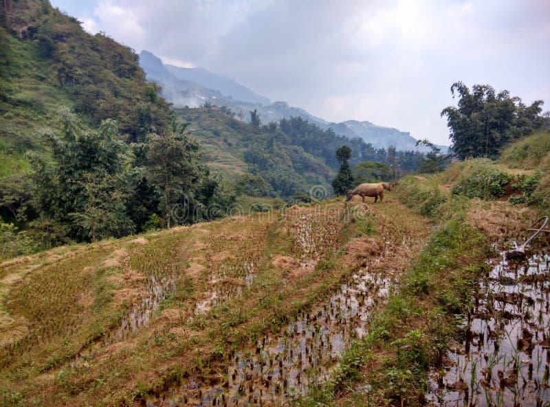 Les terrasses de riz photos libres de droits