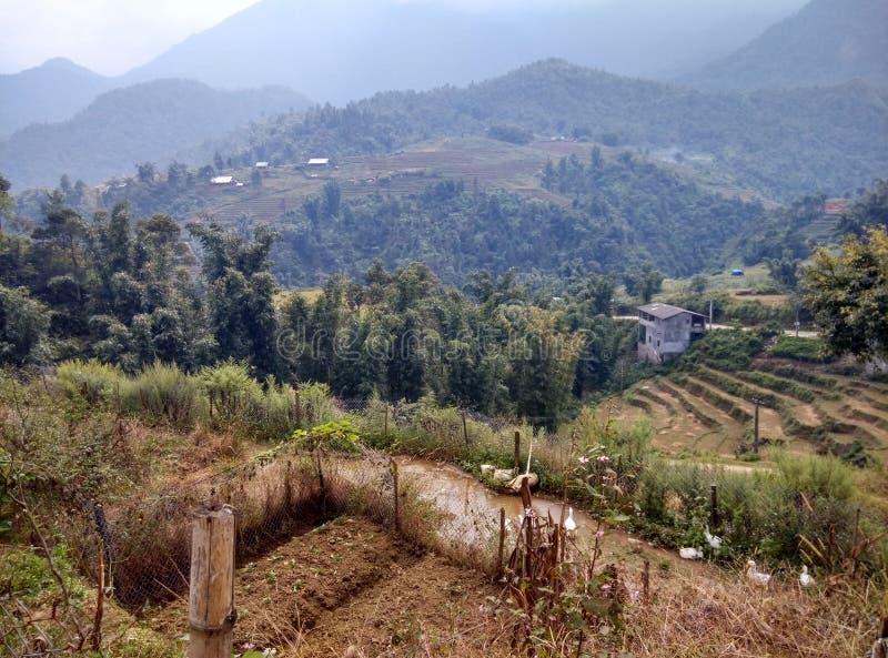 Les terrasses de riz images libres de droits