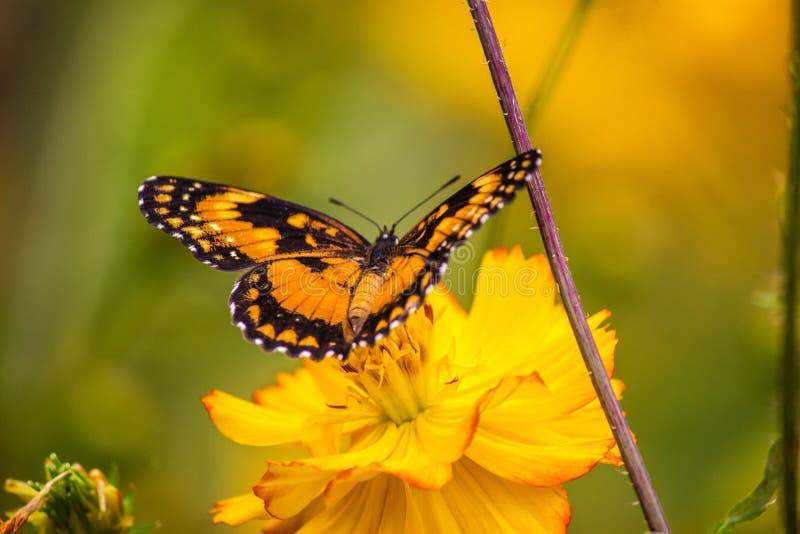les terres de papillon sur la fleur images stock