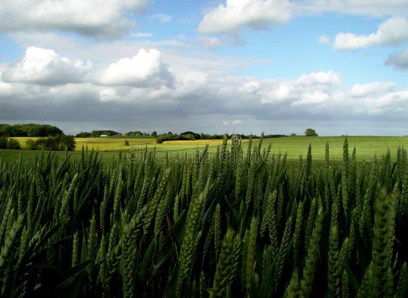 les terres fertiles images libres de droits