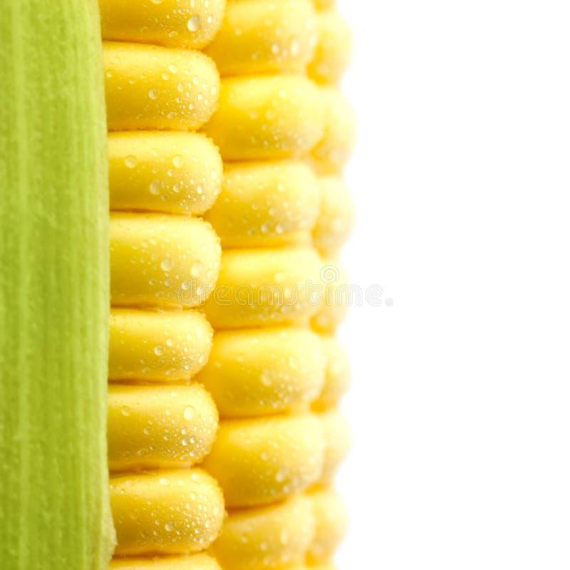 Les textures du maïs mûr avec des gouttelettes d'eau/ont isolé/mA extrêmes photo stock