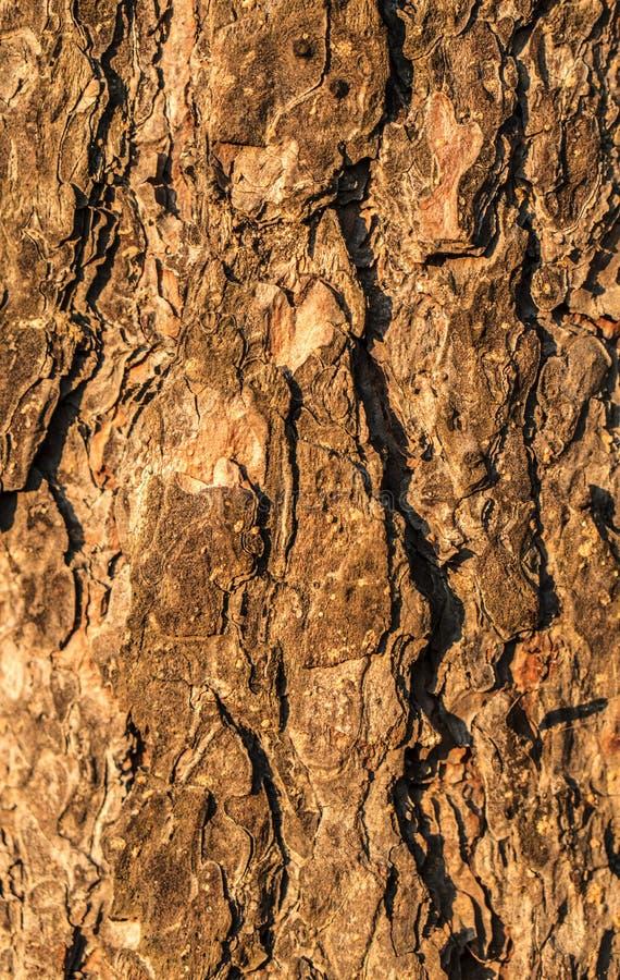 Les textures en bois images stock
