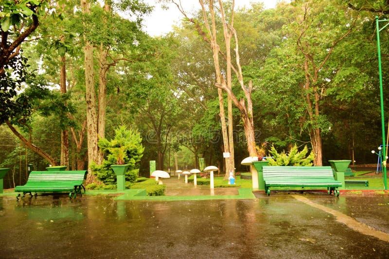 Les Thundershowers dans la forêt sont un festin à observer et entendre image libre de droits