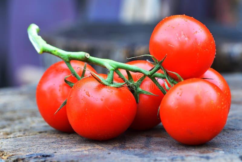Les tomates rouges savoureuses mûres Tomates organiques du marché de village Tomates fraîches Fond qualitatif des tomates photographie stock