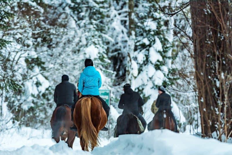 Les touristes montent des chevaux dans la vue de dos de forêt d'hiver images libres de droits