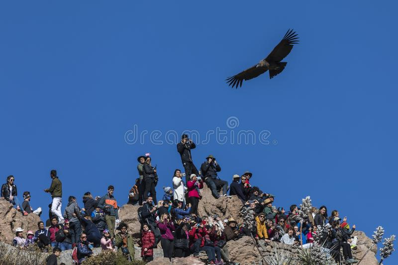 Les touristes naïfs ignorent le condor qui vole au-dessus de eux dans le point de vue du condor peru photographie stock libre de droits