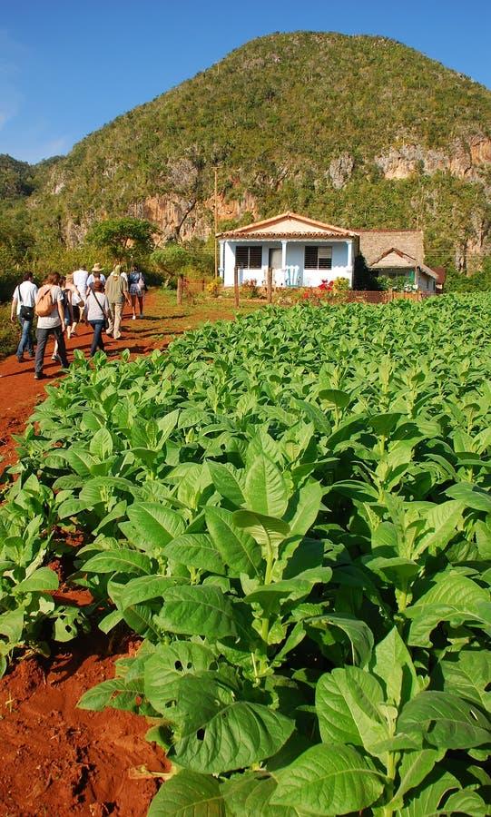 Les touristes peuvent être plantation de visite vue de tabac dans Vinales, Cuba photos stock