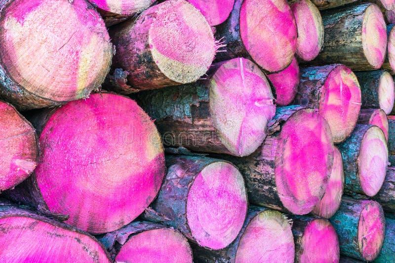 Les troncs d'arbre ont peint une couleur rose dans la section Plan rapproché de tas de bois images libres de droits