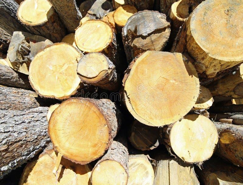 Les troncs ont coupé par le bûcheron formant une pile énorme de bois images libres de droits