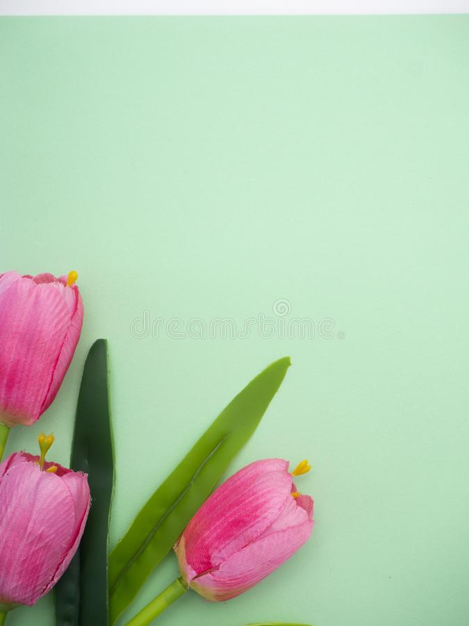 Les tulipes roses le fond de Livre vert photographie stock libre de droits