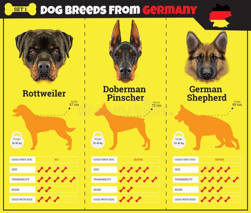 Les types d'infographics de race de chiens de chien multiplie d'Allemagne image libre de droits