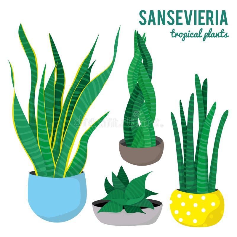 Les usines de Sansevieria dans différentes formes de pots en céramique sur le fond blanc ont isolé des vecteurs illustration stock