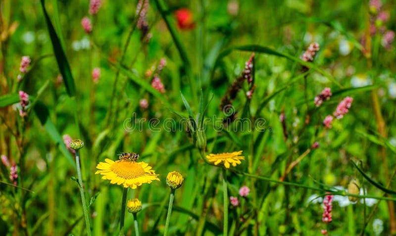 Download Les Usines Semées Colorées De Floraison Dans Un Domaine Néerlandais Affilent Image stock - Image du floraison, animal: 77156531