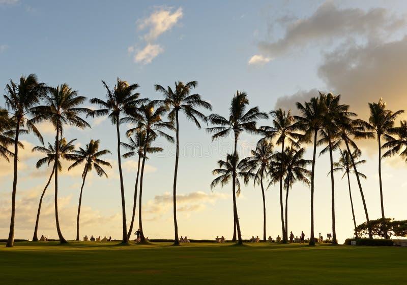 Les vacances apprécient le coucher du soleil sous les palmiers images libres de droits