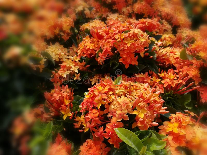 Les vacances naturelles oranges colorées d'été de fleurs voyagent voyage de fond extérieur photo stock