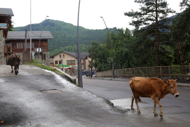 Les vaches vont le long de la rue photo stock