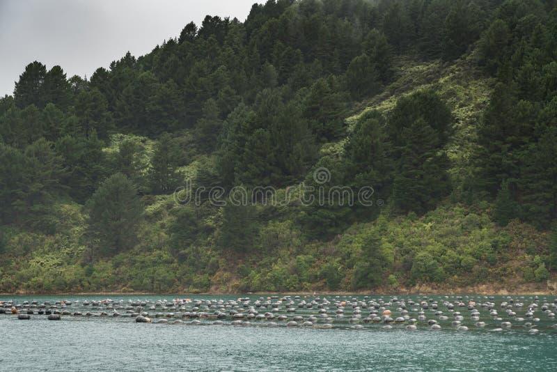Les vagabonds de la moule de baie de Hitaua cultivent avec des montagnes, Nouvelle-Zélande photo stock