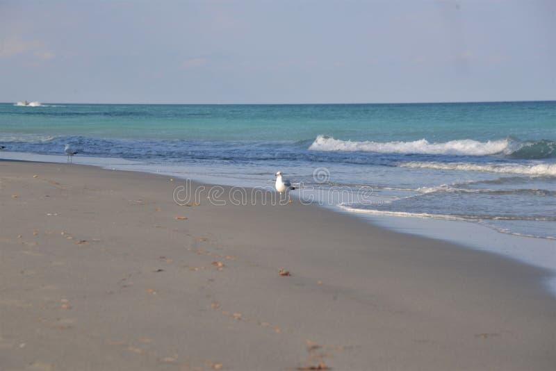 Les vagues roulent tranquillement vers la plage sablonneuse de ce rivage tropical photo libre de droits