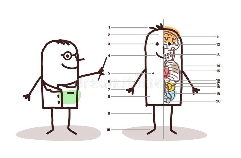 Les van de beeldverhaal de mannelijke anatomie royalty-vrije illustratie