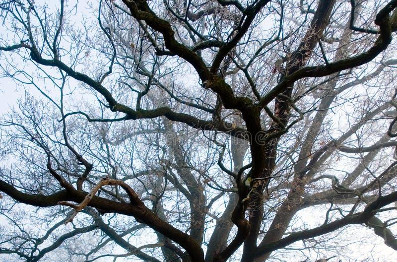 Les veines des branches d'arbre photos stock