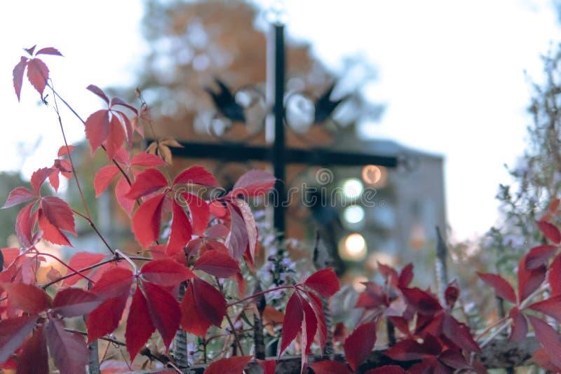 Les vieilles pierres tombales ruinent dans la forêt d'autmn, cimetière dans la soirée, foyer sélectif image stock