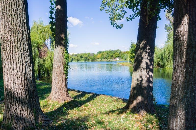 Les vieux arbres sur le rivage d'un homme ont fait le lac photos stock
