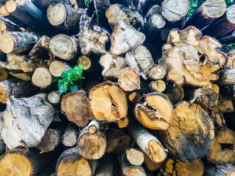 les vieux rondins en bois ont scié La texture du bois images libres de droits
