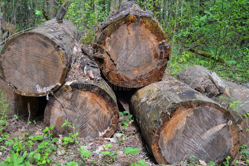 Les vieux rondins ont abattu de grands arbres, oubliés dans les bois images libres de droits