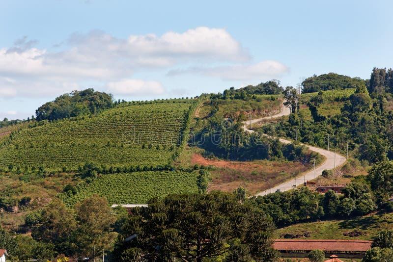 Les vignes dans Rio Grande font Sul images libres de droits