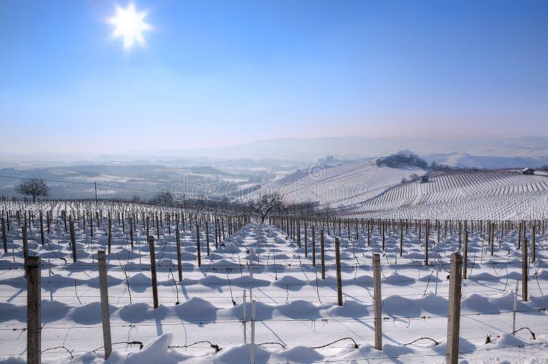 Les vignes de Snowy Piémont, Italie photographie stock libre de droits