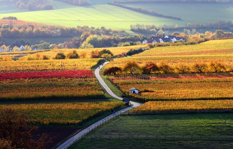 Les vignes en automne photographie stock