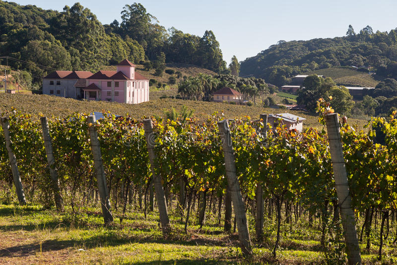 Les vignes Rio Grande de Padoue de nova font Sul Brésil photo stock