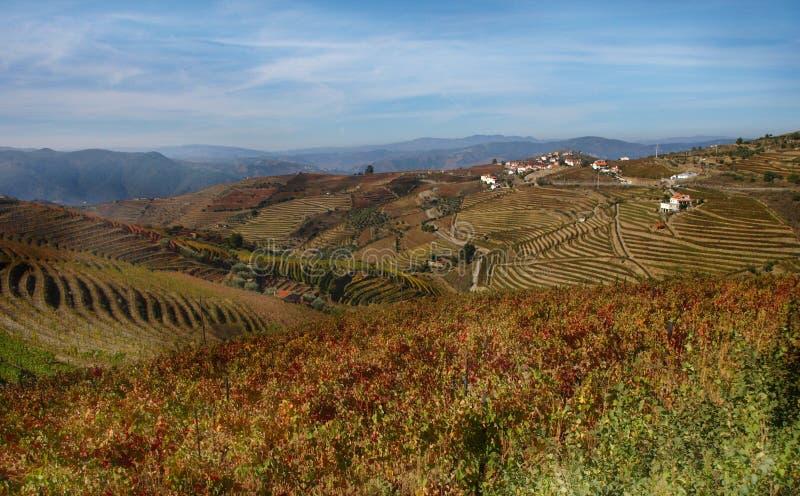 Les vignobles de région de vin de Douro aménagent le Portugal en parc photo libre de droits