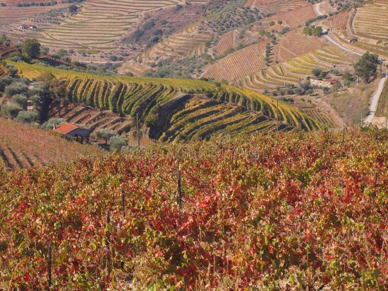 Les vignobles de région de vin de Douro aménagent le Portugal en parc photographie stock libre de droits