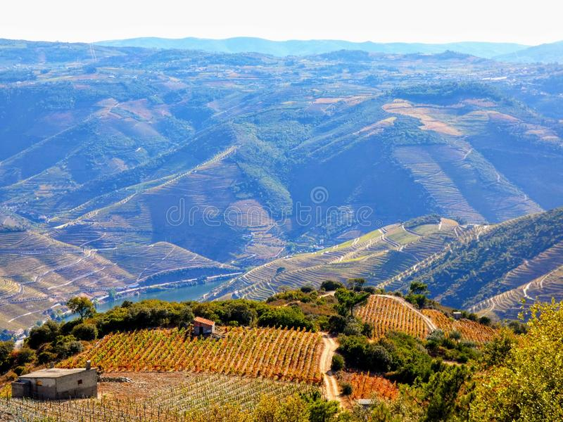 Les vignobles en terrasse forment les flancs de coteau du ` s Douro River Valley du Portugal image libre de droits