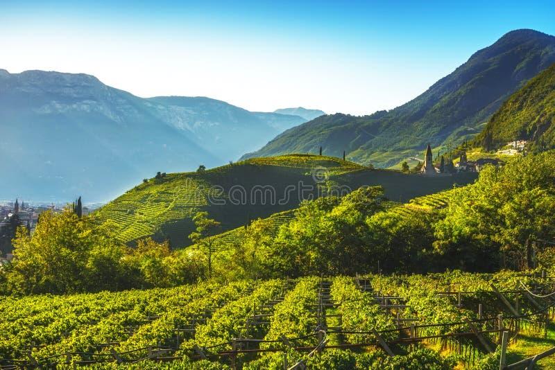 Les vignobles regardent en Santa Maddalena Bolzano Trentino Alto Adige S images libres de droits