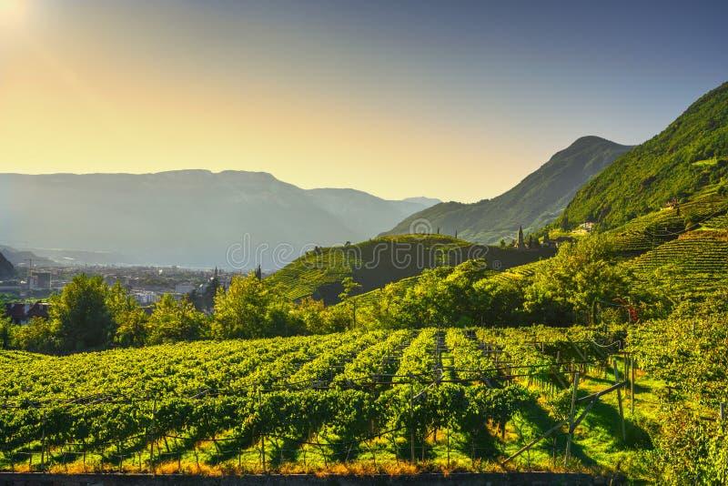 Les vignobles regardent en Santa Maddalena Bolzano Trentino Alto Adige Sud Tyrol, Italie photographie stock